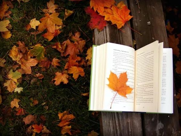 【节气•秋分】昼夜均,寒暑平,人间最美是秋分!